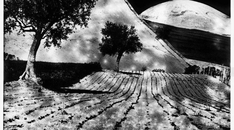 Da Presa di coscienza sulla natura (1977-2000). Campagna marchigiana © Archivio Mario Giacomelli, Senigallia